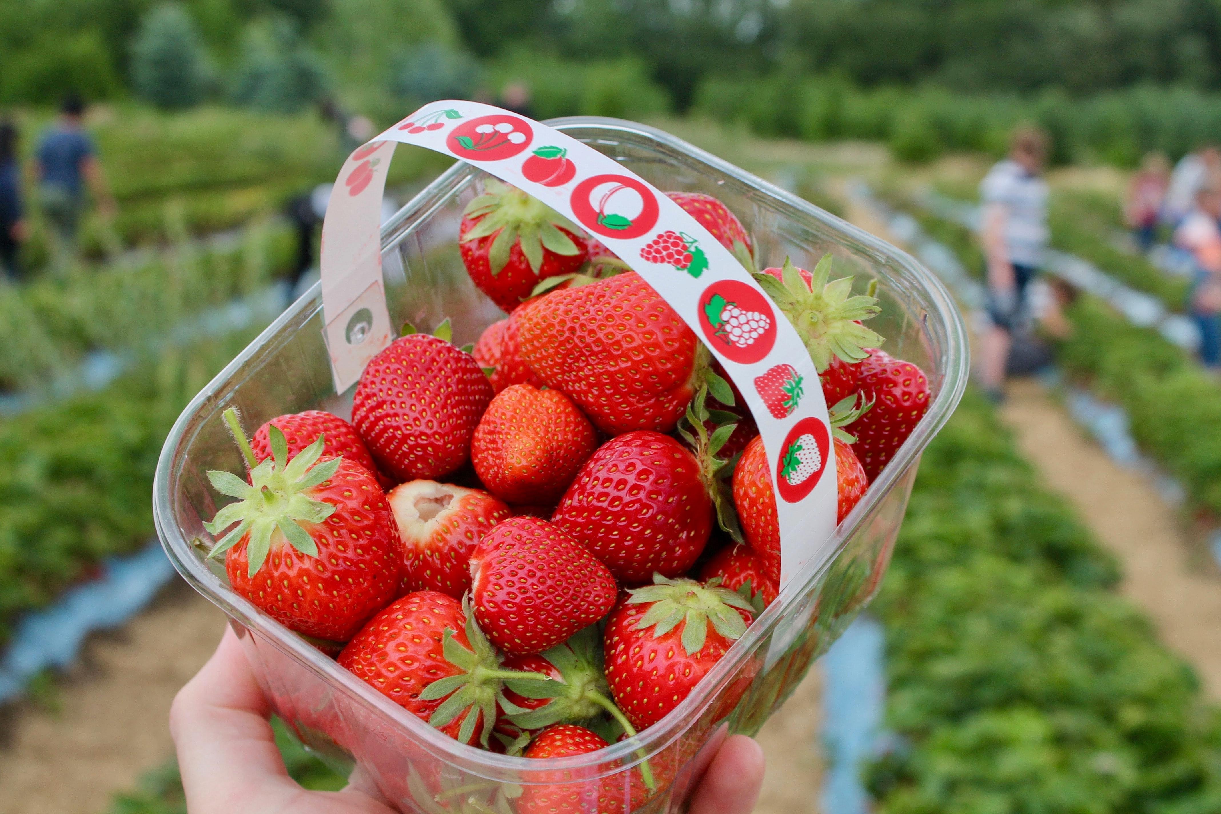 emballage plastique fraises